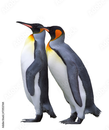 Papiers peints Antarctique Two isolated emperor penguins