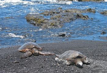 Sea turtle on the Black sand Beach