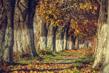 Serene autumn landscape with fallen leaves on alley