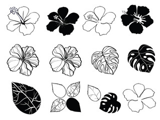 Black and white flowers of hibiscus, vector illustration