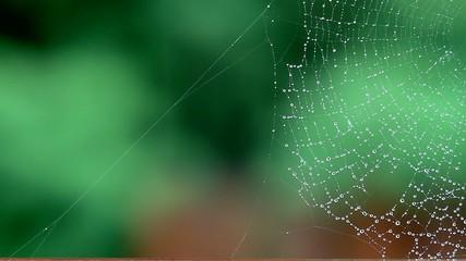 паутина на фоне  зелени