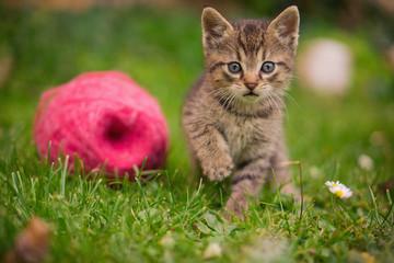 Lovely little Cat