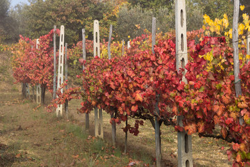 Vigna umbra in autunno