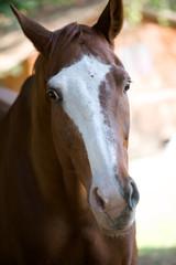 La testa del cavallo
