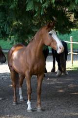Cavallo al Paddock 91