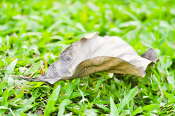 brown leaf on the green grass