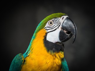 Colourful parrot close-up
