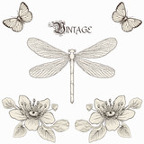 vintage dragonfly, flowers and butterflies drawing