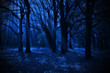 Night forest - 73161737