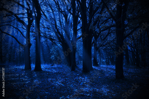 Poster Night forest