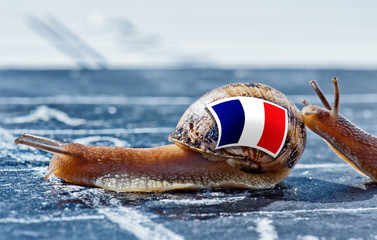 snail with France flag encouraged