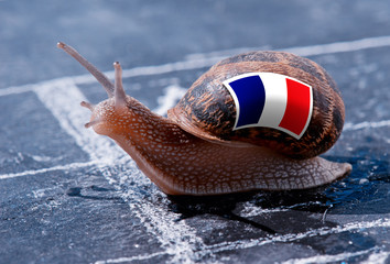finish line winning of a snail with the colors of France flag