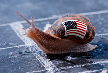 finish line winning of a snail with the colors of Usa flag