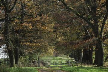 Baumallee im Nationalpark Reinhardswald