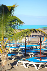 Canary beaches