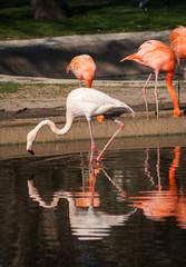 Bright pink flamingos