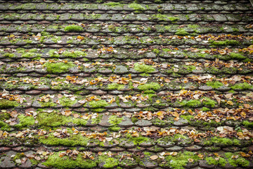 old grungy roof tiles overgrown with moss