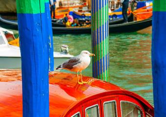Seagull sitting on a Gondola at Venice Italy
