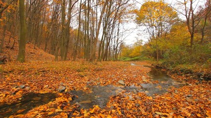 stream and forest in autumn