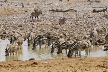 Wasserloch, Okaukuejo, Etosha Nationalpark, Namibia, Afrika