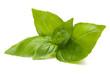Sweet basil leaves