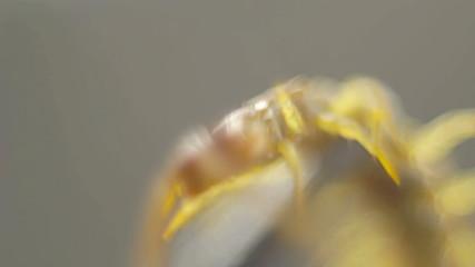 Closeup of centipede struggling shallow DOF
