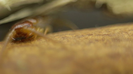 Macro shot of centipede head under a twig
