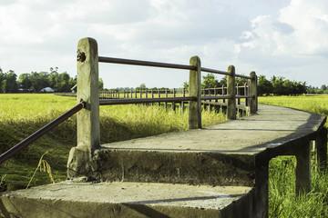 Bridge fields