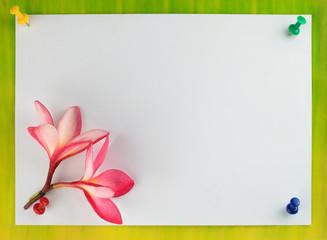 Card design, frangipani (plumeria)