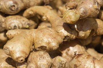 rhizome de gingembre