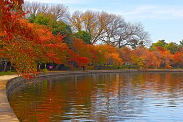 Trees in autumn foliage along Tidal Basin walkway, Washington DC