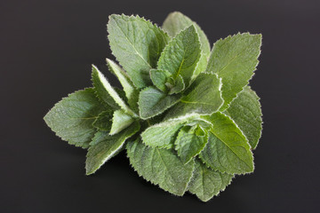Fresh mint