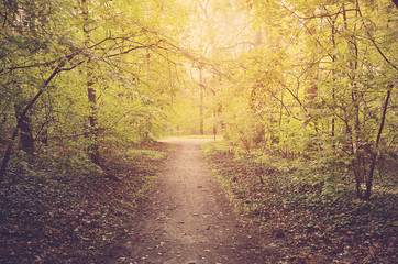 Path in autumn forest on a sunny day
