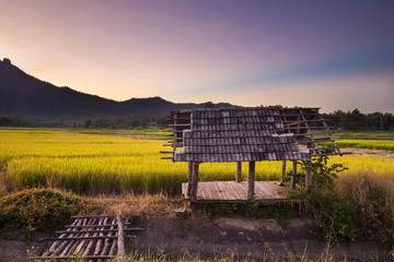 Rice fields at sunset in Lampang, Thailand