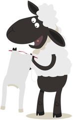 mouton tricotant son propre pull