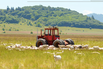 Sheep Tractor