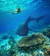 canvas print picture - Young woman snorkeling with whale shark.