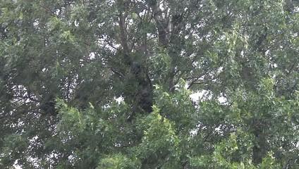 Regen und heftiger Wind am Baum mit Blätter