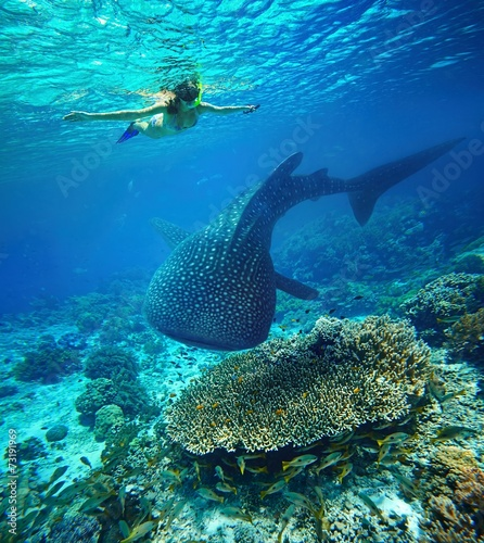 Young woman snorkeling with whale shark.