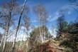 Apremont, forêt d'Ile de France en automne