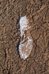 Fußabdruck- Salzpfanne Lüderitz