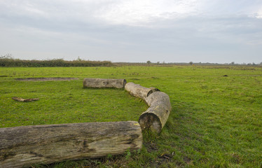 Circle of trunks in a field in autumn