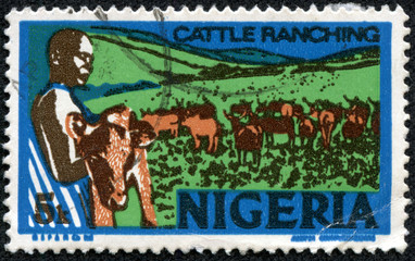 young nigerian, holding a calf, cattle ranching