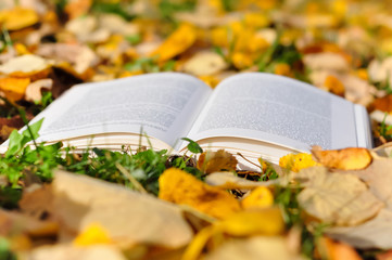 Open book and autumn leaves