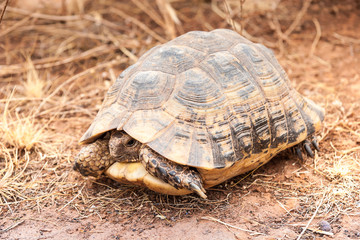 Turtle on the ground