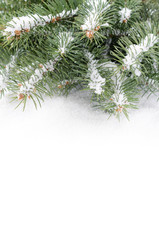 Branch of Christmas tree on a snow over white background