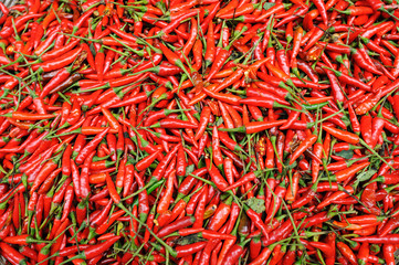 Hot and fresh red chili pepper background