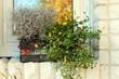 canvas print picture - Dekoration, Pflanze, Korb, Blume, Herbst, Fenster