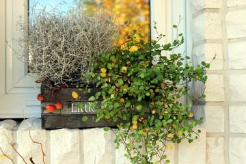 Dekoration, Pflanze, Korb, Blume, Herbst, Fenster