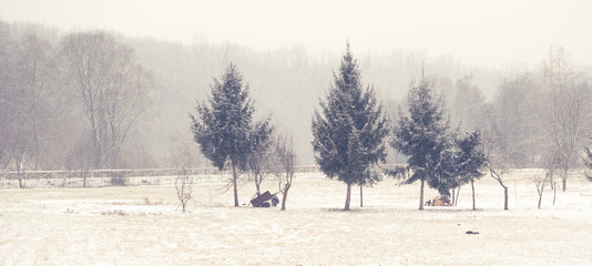 neve in inverno